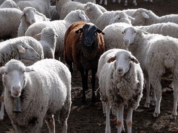 Black Sheep Genealogy